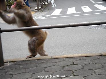 20081025nichijyo2