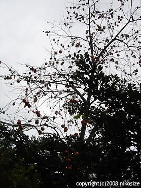 20081028nichijyo11