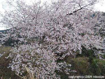 20090328nichijyo5