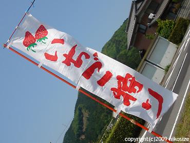 20090509ichigogari1