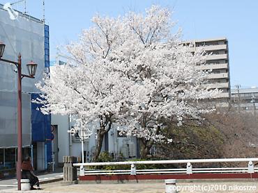 20100322nichijyo7