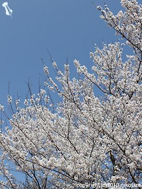 20100322nichijyo8